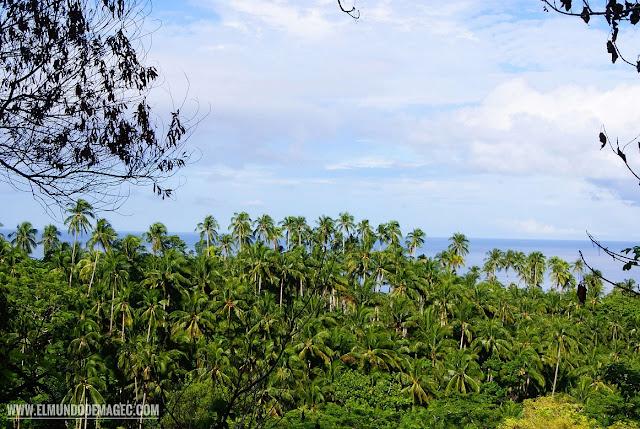 Camiguin-la-isla-verde-que-ver-hacer-palmeras-bosque