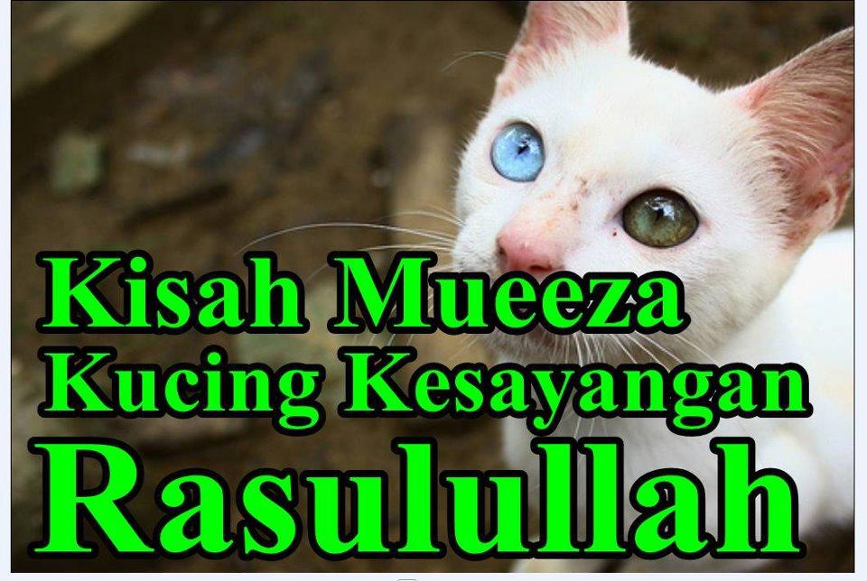 Nama Kucing Arab Flauschige Katzen