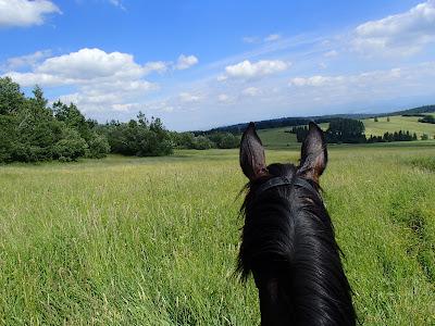 wakacje 2017, grzyby 2017, wyjazd na wakacje, transport koni