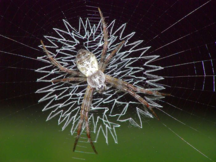 Beautiful Spider Web Pictures (16 Pics)