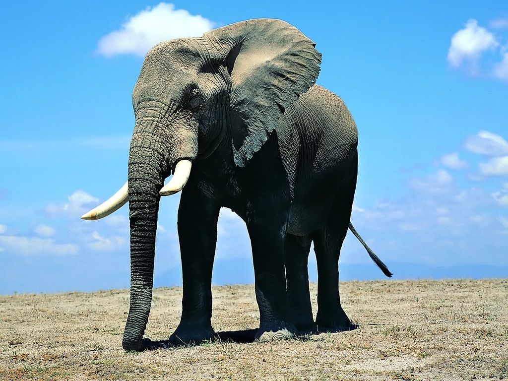 Beautiful Pictures OF Elephant In HD