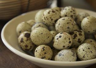 gambar telur puyuh