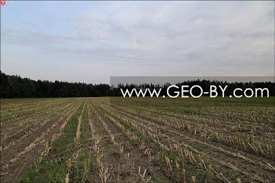 Сжатое кукурузное поле у деревни Братково