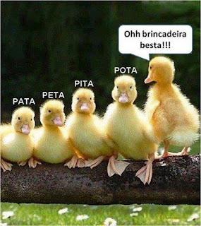 Cinco filhotinhas de pata estão agachadas lado a lado em um tronco, em ordem crescente de tamanho. Sobre a cabeça de cada uma, os nomes: Pata, Peta, Pita, Pota; a última da fila esbraveja em pé: Ohh, brincadeira besta!!!