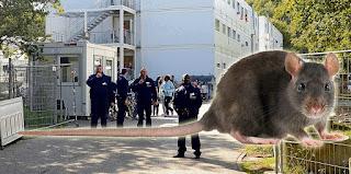 Крысы переносят болезни