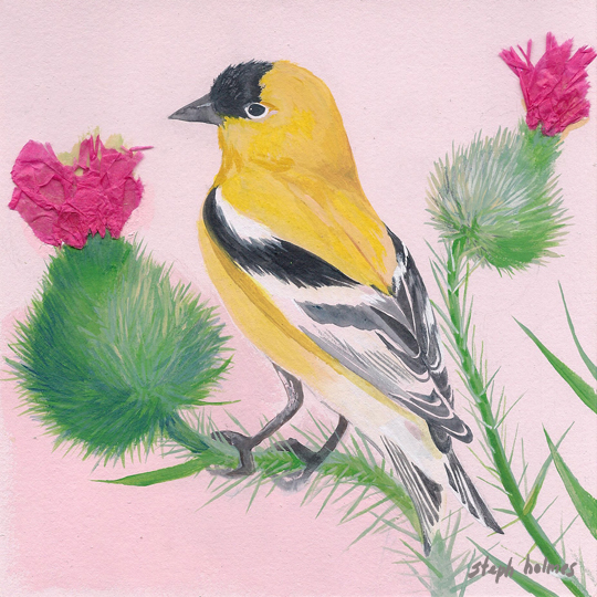 American Goldfinch bird