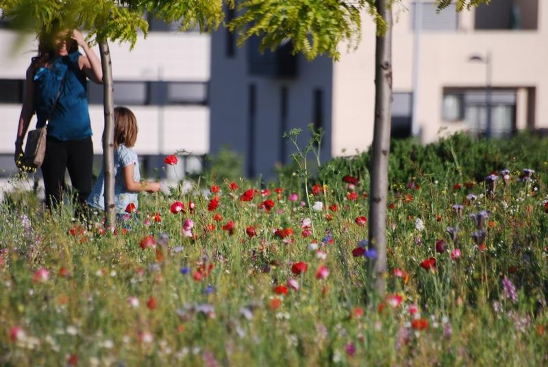 """""""Pictorial Meadows"""" praderas pictoricas de flores multicolor de enorme valor ornamental y atractivas para la fauna silvestre creadas por  profesores Nigel Dunnett y James Hitchmough, ahora en España con Miguel García"""