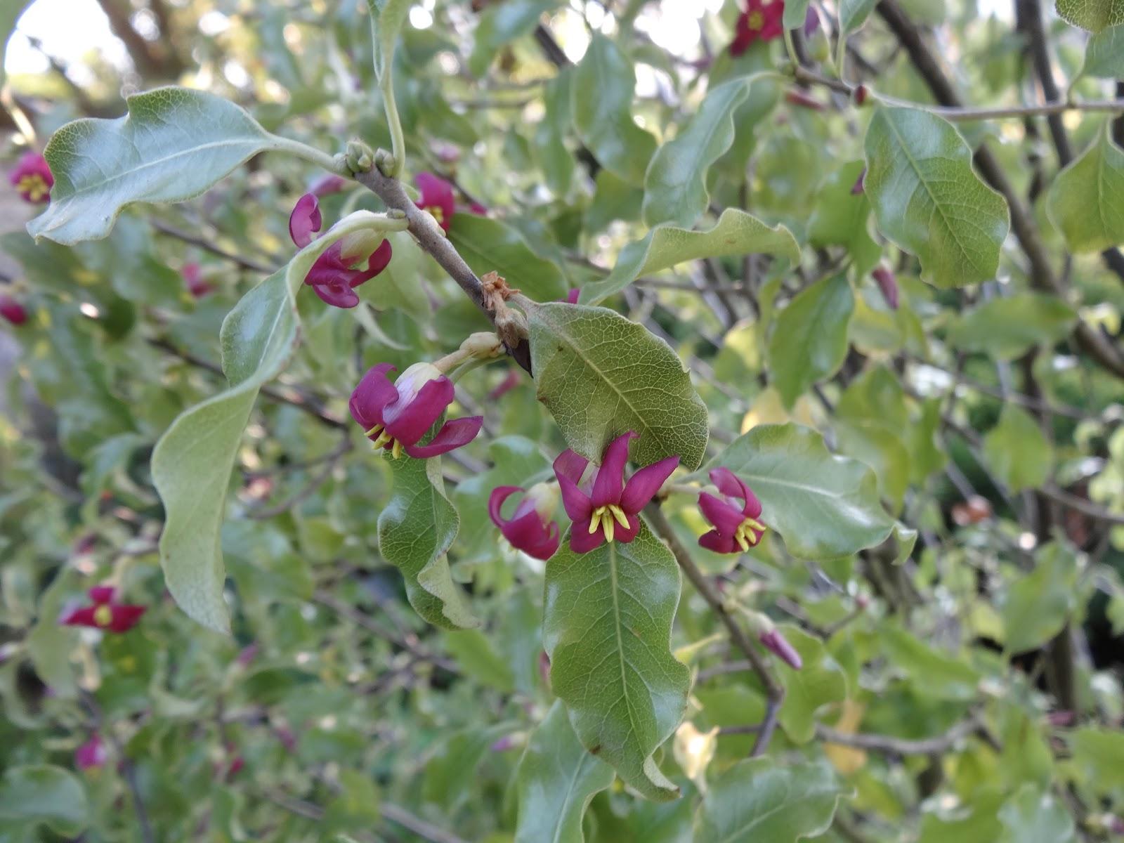 Le Blog De Parcs Et Jardins De L Oise Arbustes Originaux En Fleurs