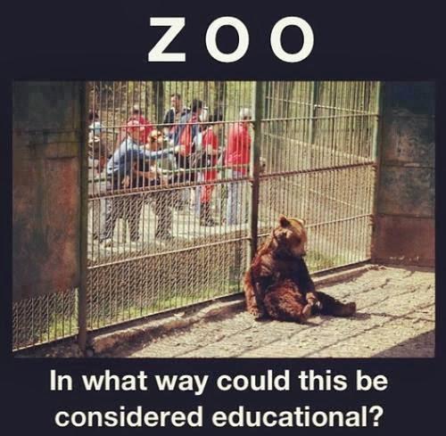 On Loving Animals...