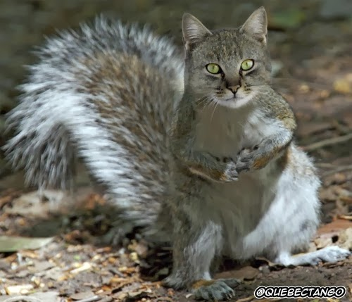 06-Cat-and-Squirrel-a-Carrel-Graphics-Designer-Digital-Taxidermist-Animangler-www-designstack-co