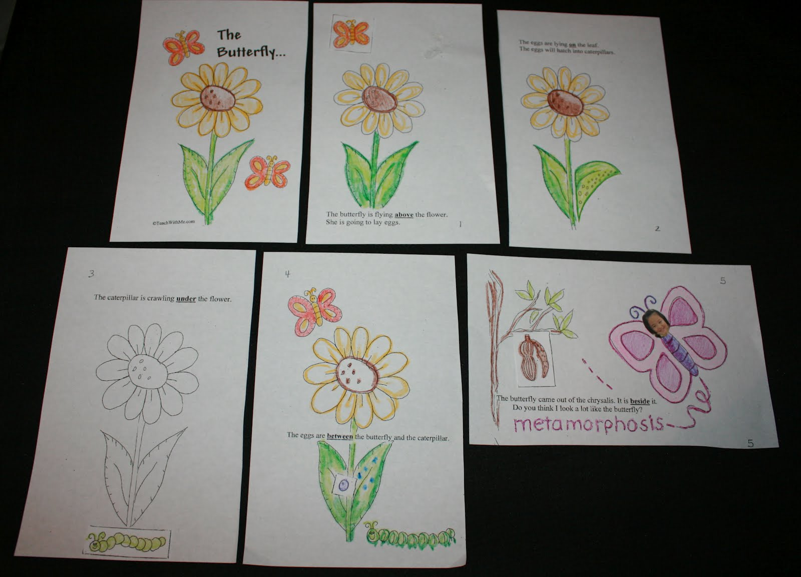Classroom Freebies Too The Butterfly
