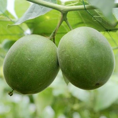 Monk Fruit (Siraitia Grosvenorii) Overview, Health Benefits, Side effects