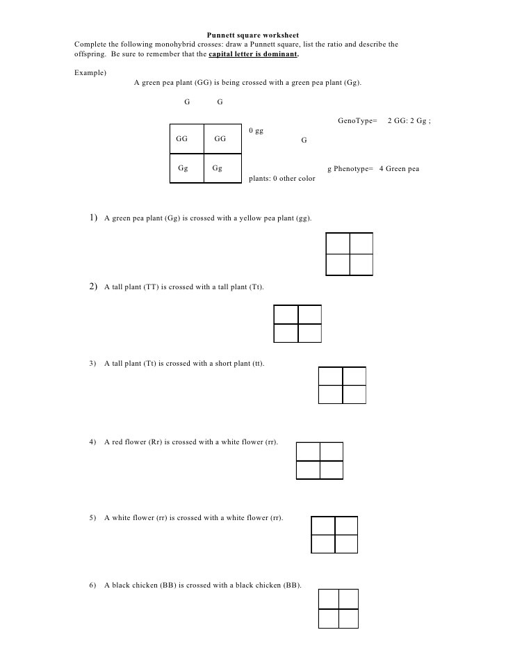 Pictures Monohybrid Cross Worksheet With Answers - Jplew