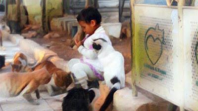 Niño jugando con gatos en refugio de Alepo