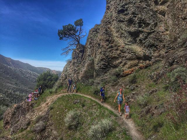 Hiking Mt. Diablo Falls Trail Loop single track