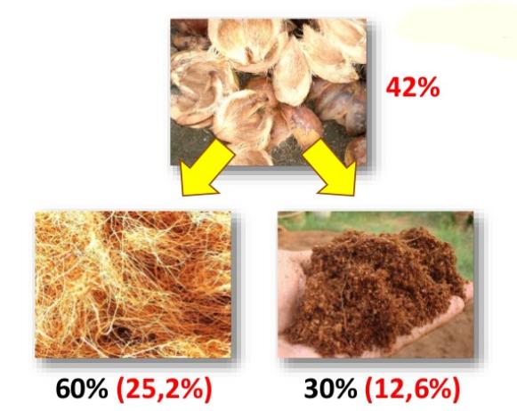 Manfaat Memberi Serabut Kelapa Pada Tanaman Didalam Pot ( Tabulampot )