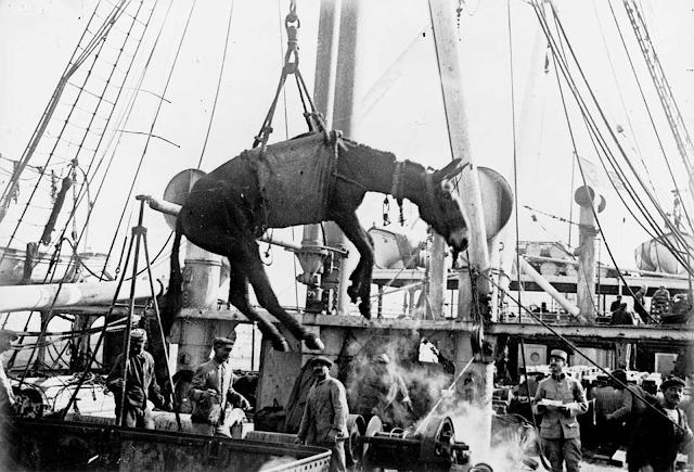 Los animales en la Primera Guerra Mundial