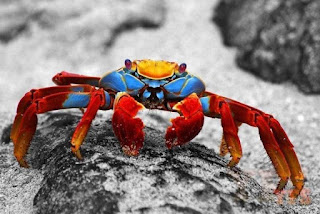 Crab Facts in Hindi