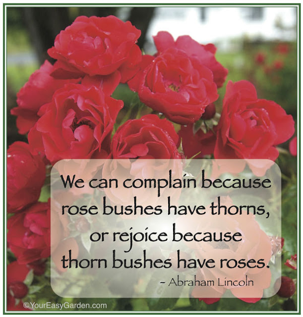 Happy Rose Day With Quotes 2016