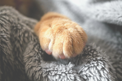 ginger cat paw on blanket