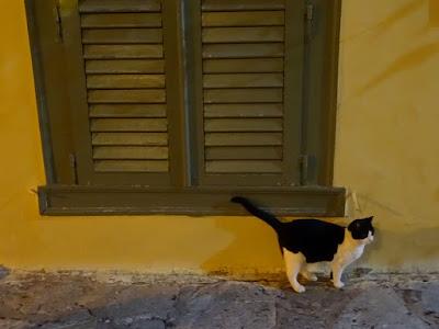 Το Ρινάκι. Οι γάτες της Αθήνας