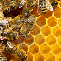make money from honey