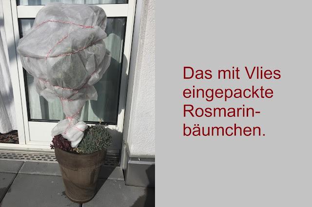 Rosmarinbäumchen im Wintervlies