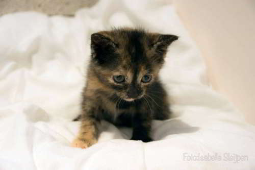 gatitos en adopcion