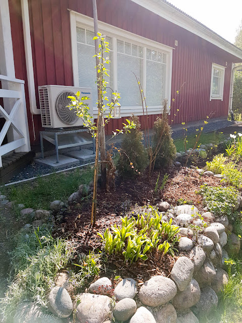 perennapenkki talo koti puutalo piha kukkamaa