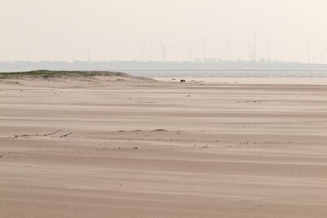 Sandfläche auf dem Flinthörn auf Langeoog