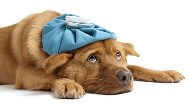 Pet Symptom Checker Diagnosis