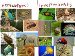 Klasifikasi Hewan Vertebrata Dan Invertebrata Fahmy Alhafidz