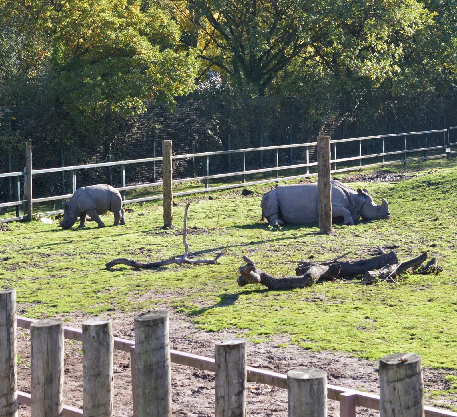 Tips for Visiting Chester Zoo from Newcastle - Baby Rhino