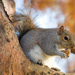 What You Don't Know About Squirrels