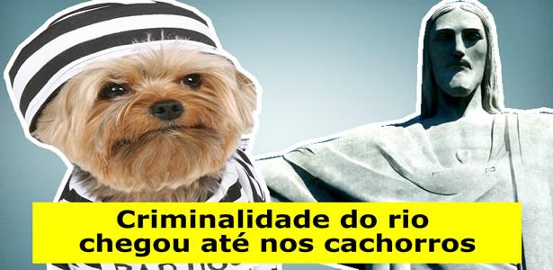 Criminalidade do Rio chegou até nos cachorros