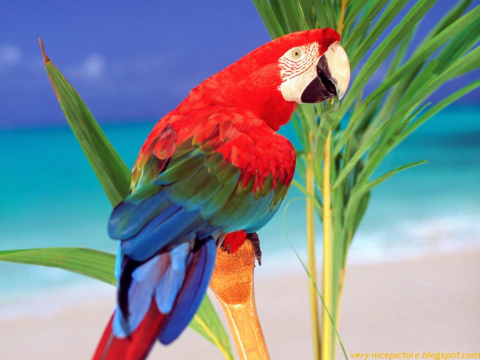 Nice wallpapers islamic wallpapers aqwal e zareen bird - Hd pics of nature with birds ...