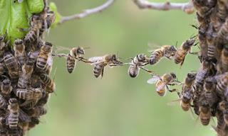 Η υγεία μας συνδέεται με την υγεία των… μελισσών! Τι έδειξε μεγάλη έρευνα