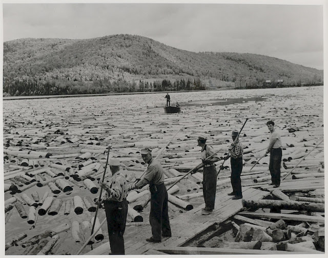 1950's log drivers in New Brunswick