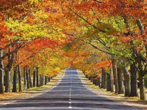 rüyada+cadde+görmek+anlamı