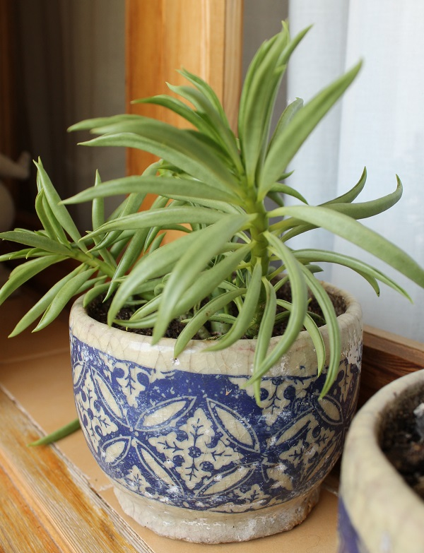 Plantas crasas o suculentas guia de jardin for Plantas crasas interior