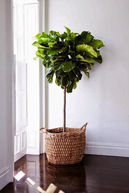 Decorar con cestas naturales y plantas-2