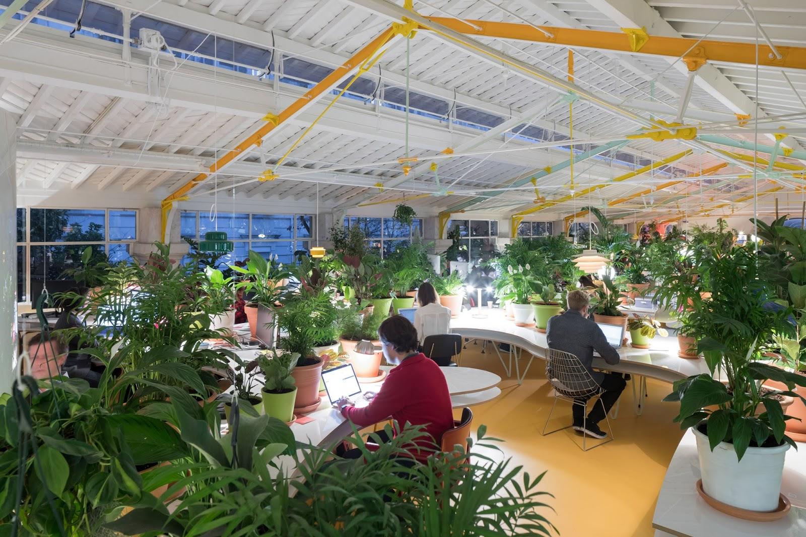 Planten Op Kantoor : Wordt een leefbaar kantoor beter met groen koen