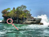 Wisata Tanah Lot Bali, Misteri Ular Suci Penjaga Pura