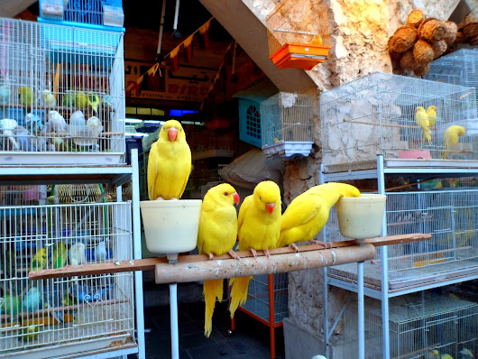Qatar Live animal Selling area of Souq Waqif |Gazzan -Travel Photos,Animals,Design,Event Photos ::::