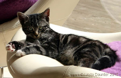 tabby kitten resting on chair, looking at camera