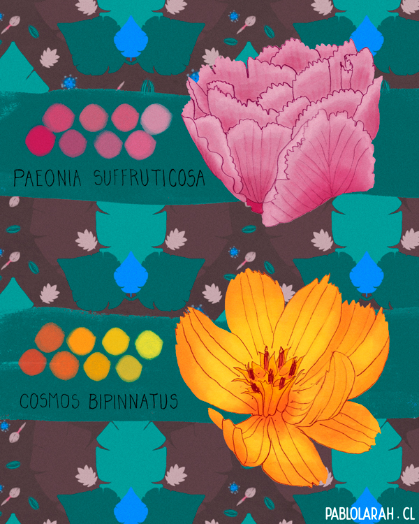 Peony and Cosmos Flower Illustration by Pablo Lara H, pattern, free brushes