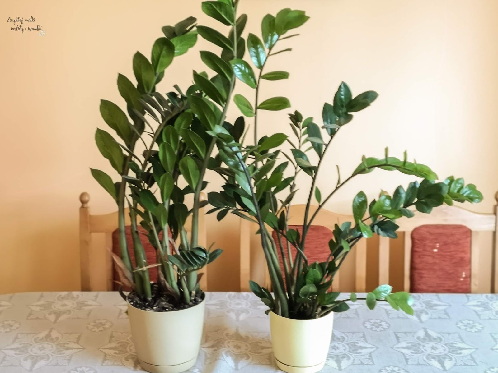 Walka ze smogiem, czyli rośliny oczyszczające powietrze