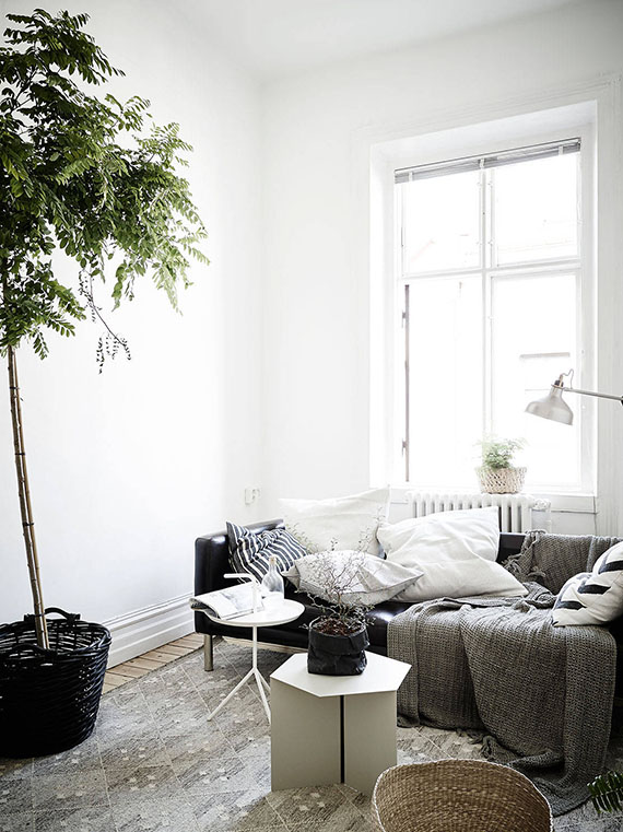 Indoor plant in living room. Image via Stadshem