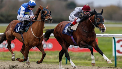 Horse Racing Tip