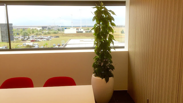 Plantenverhuur in witte strakke design plantenbak voor bedrijven met onderhoudscontract. Planten voor aan de muur of aan het plafond binnen en die weinig licht nodig hebben of donker kunnen staan Prijzen op aanvraag